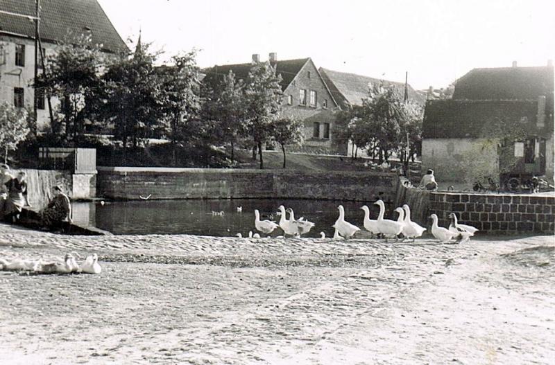 Siersleben-Teich-2