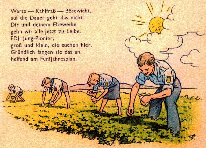 plakat ablesen von kartoffelkäfern um 1950